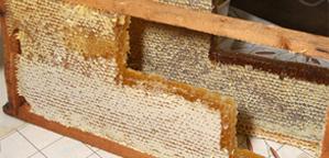 Мед и продукты пчеловодства в ассортименте на рижском рынке